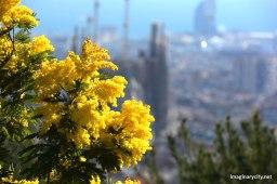 Las vistas de la Mimosa