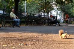 East Village -Tompkins Square Park #03
