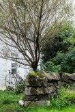 Isle of Mull - Tobermory #08